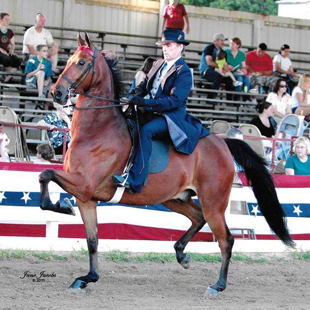 "We called him ""Stretch""  Patraeus out of our mare Winsdown Telega Said by Stonewall's Eldorado Jackson shown with John Biggins."